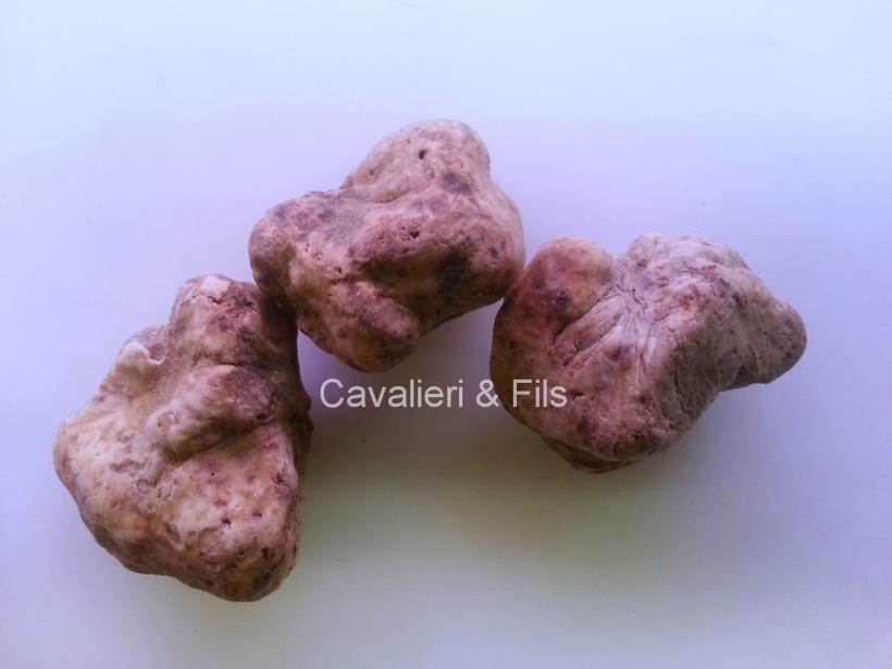 Truffes-Cavalieri-2
