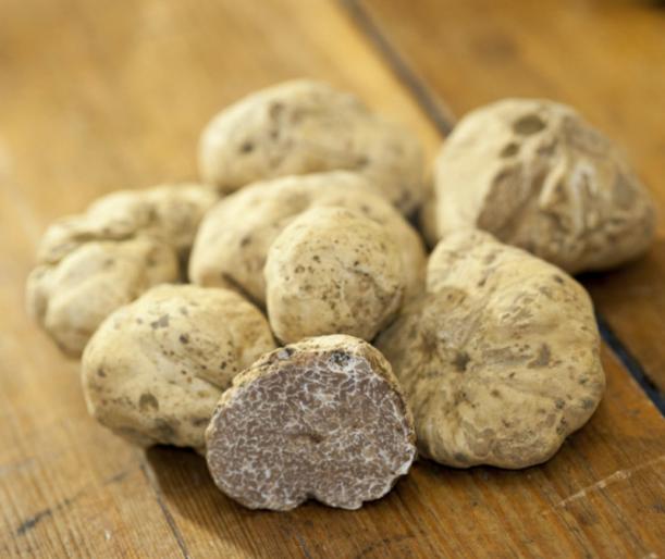 cavalieri-truffe-blanche